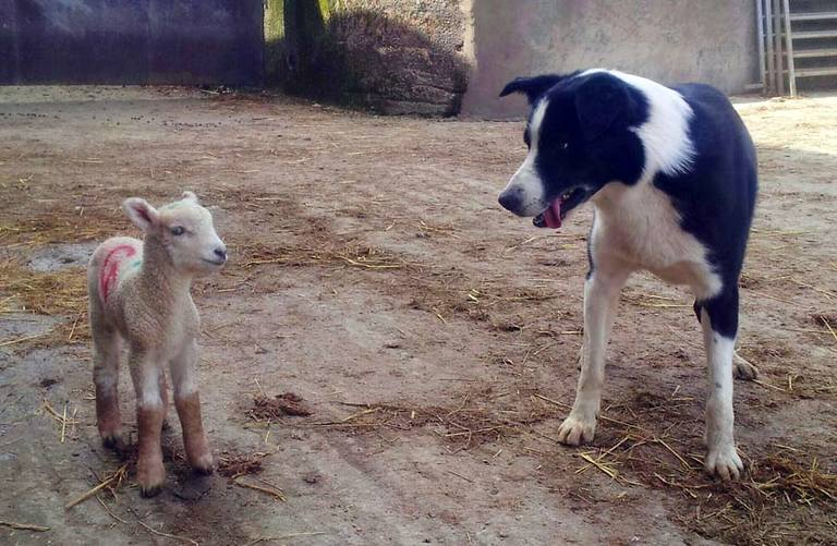 Lamb and Dog Farm Holidays
