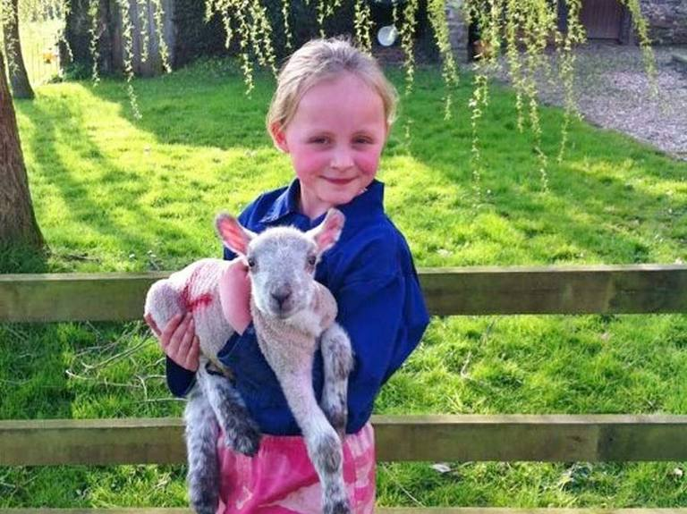 Lamb with Girl on Holiday